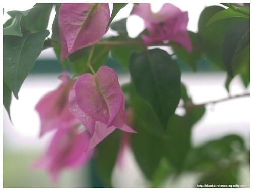 Flowers 110709 #02