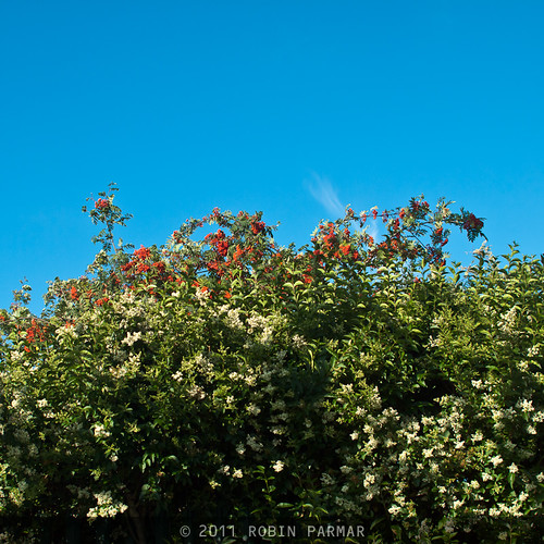 red berries, blue sky @ f/4