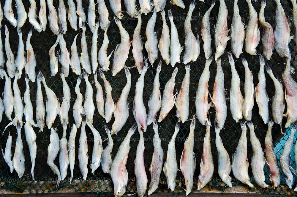 Drying Fish @ Pulau Ketam, Malaysia
