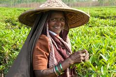 Laughing Tea Picker - Srimongal, Bangladesh (uncorneredmarket) Tags: people tea bangladesh teagardens teaestates manuallabor srimongal teaplantations ruralbangladesh teapickers sylhetdivision sreemangal