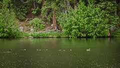 I Love a Parade (Doug Sundseth) Tags: camping duck colorado boyscouts cormorant bsa camptahosa tumblesomlake