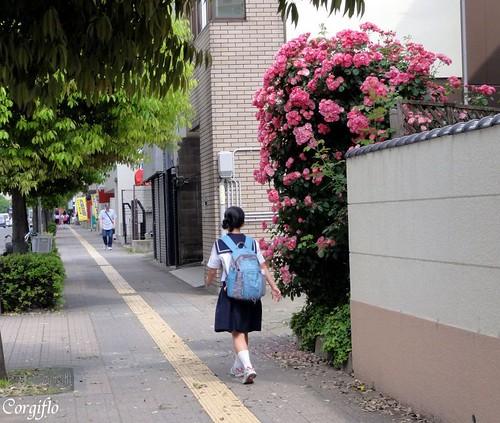 blog-110715-ROSEScorgis5