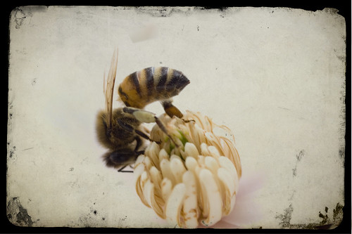 to bee or not to bee!
