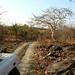 Panna Tiger Reserve, show de visual