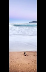 avoca, nsw (Andrew Cooney Photography) Tags: panorama white seascape beach water landscape coast sand nikon waves slow north central wave australia scene panoramic nsw shutter newsouthwales pan centralcoast avoca 2470mm d90 northavoca nikond90