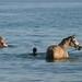 Ate os cavalos nao resistem ao lago