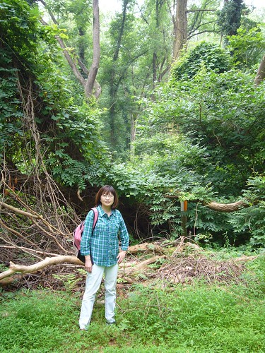 Dr. Yude Pan, a U.S. Forest Service scientist and a lead author of a new report from the U.S. Forest Service finding that forests play huge role in reducing carbon and higher global temperatures.