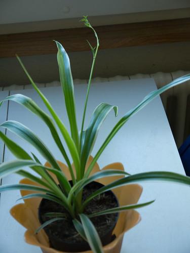 My Plants 2.jpg