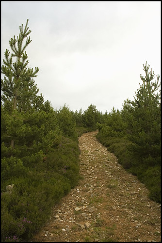 Hill Track I
