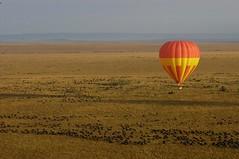 Balloon trips over the Mara (TheSafariCollection) Tags: africa kenya bigfive masaimara eastafrica wildebeestmigration luxurytentedcamp salascamp