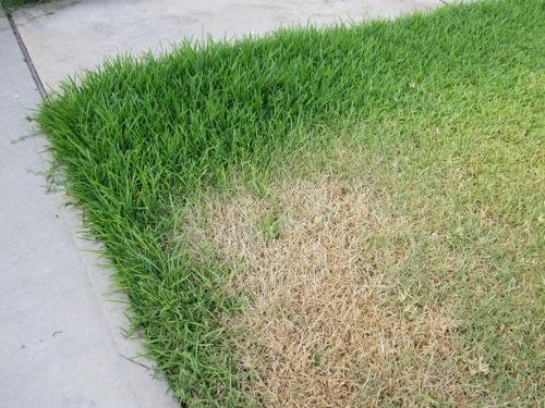HoH_overgrown_dead_yard_2