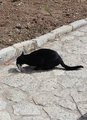 Bird being eaten by Monastery Cat