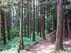 瀬上市民の森(A3標識付近)(Segami Community Woods)