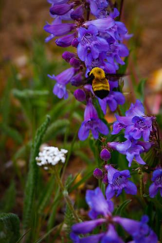 Mountain flowers-7.JPG