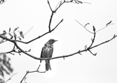 Bird in a tree (Dave Road Records) Tags: