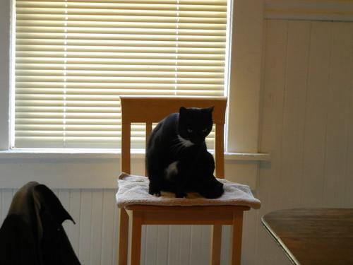 Cat _ 4108