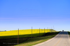 Down The Road (johnfuj) Tags: plants flower nature ecology scenery grain crop land environment crops grains agriculture environmentalism canola ecosystem agronomy cropland farmscape