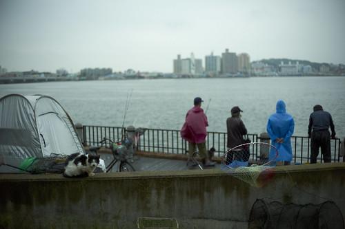 shonan fishermen and cats