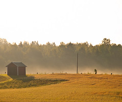 morningrise (netzanette) Tags: morning summer mist sunrise countryside morninglight nikon sweden sunrays morningmist sunriselight d80 nikond80