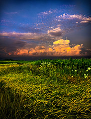 Cumulus Nimbus (Phil~Koch) Tags: morning flowers blue sunset red summer sun green love floral field vertical wisconsin clouds sunrise photography landscapes spring twilight peace earth farm natur scenic meadow inspired naturallight farmland serene agriculture inspirational horizons environement philkoch myhorizonart