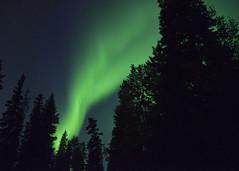 Bright Lights (Lee Petersen) Tags: alaska night ak aurora fairbanks northernlights auroraborealis