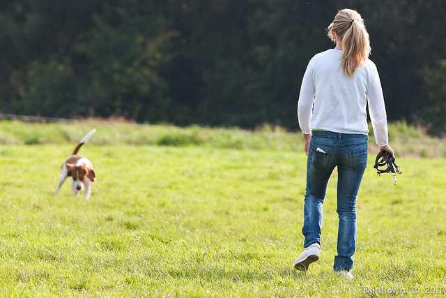 Walking with our beagle