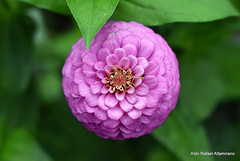 Flower (Rafakoy) Tags: city nyc urban ny newyork flower color macro green nature colors closeup digital garden nikon bokeh centralpark manhattan nikkor ping ais nikond7000 vivitar70150mmf38macro