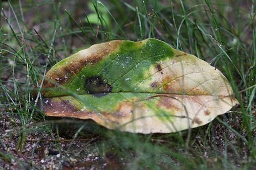 森で出会った葉 / The leaf  in a forest