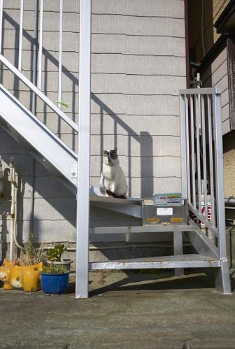 cat and mailbox