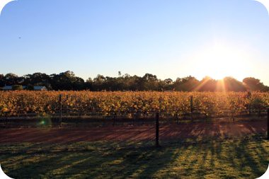 sunset over the vines..