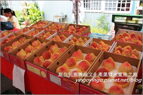 新竹尖石_2011尖石水蜜桃20110709_I0053