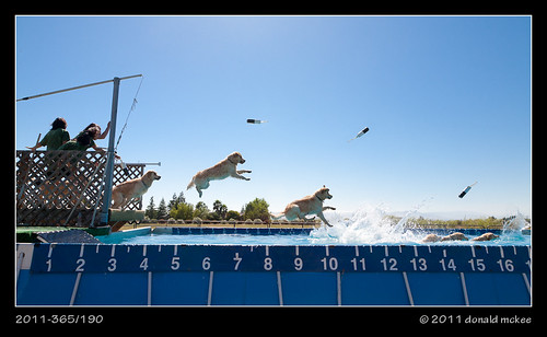 2011-365/190 - Happy (Dock Diving Dog)