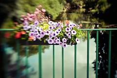 A Fleur de Rivière ... (Monsieur Nounou) Tags: bridge flowers lensbaby fleurs decoration bunch pont bouquet gather poètique