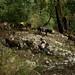 Tropas de mulas descendo a ladeira