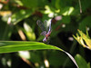 Female Dragonfly A photo of