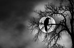 Sadness (MJ ♛) Tags: moon tree bird silhouette fog night canon eos sadness alone sad mj full 7d 75300mm ef 2011