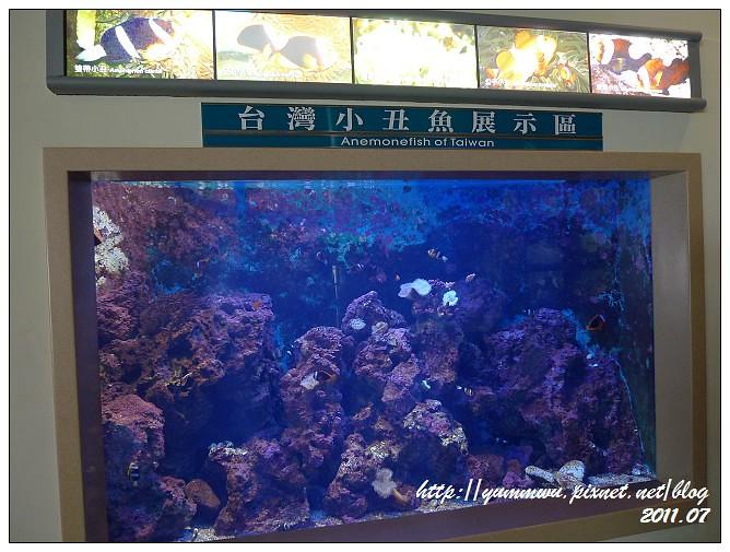110711小丑魚主題館 (15)
