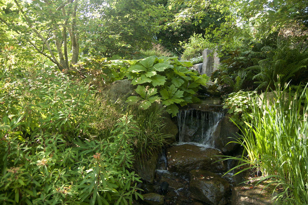 Waterfall with Rodgersia