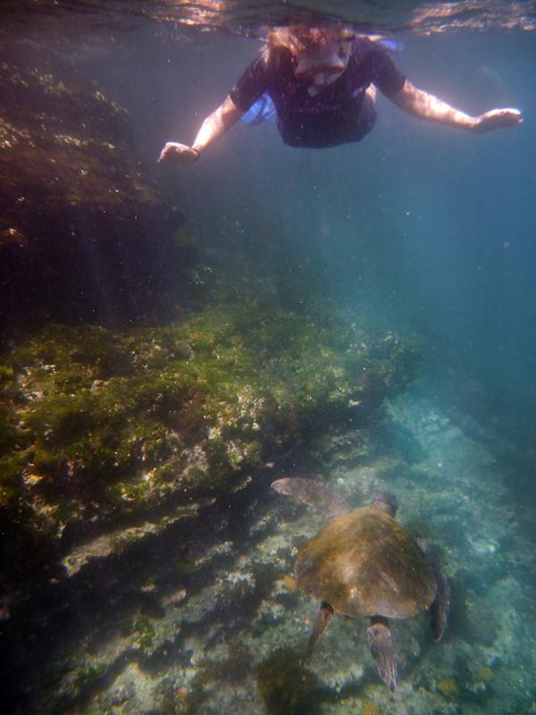 RYALE_Galapagos_Underwater-24