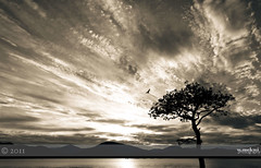 Bird, tree and sky (w.mekwi photography [on the road]) Tags: bw mountains tree bird nature silhouette landscape scotland toned lochlomond nikond90 milarrochybay nikkor18105mm wmekwiphotography