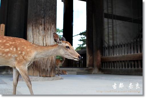 20110711_4thDay Nara _0570 f