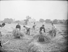 Harvest Time (National Library of Ireland on The Commons) Tags: men field women village farmers harvest crops flax mowers glassnegative scythe 1890s binders labourers robertfrench williamlawrence nationallibraryofireland lawrencecollection irishlifeseries