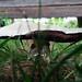 2011.07.27.Garden.Mushroom.DSCF4183