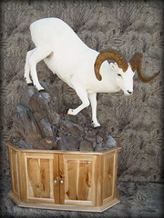 "Dall Sheep Taxidermy • <a style=""font-size:0.8em;"" href=""http://www.flickr.com/photos/27376150@N03/5986905622/"" target=""_blank"">View on Flickr</a>"
