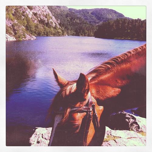 #horse #summer #riding #bergen