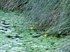 carezze d'erba