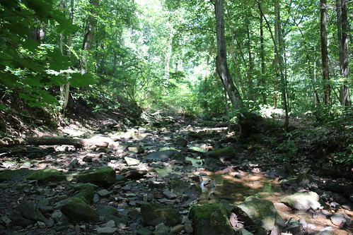 Creek bed in Tyler State Park