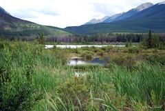 Vermilion Lakes (rnasset) Tags: banff vermilionlakes