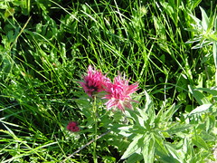 Semi rare colored paintbrush.