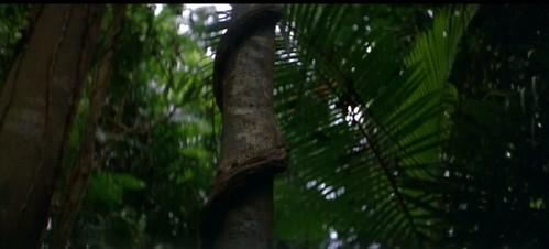 thin red 3 vine around tree